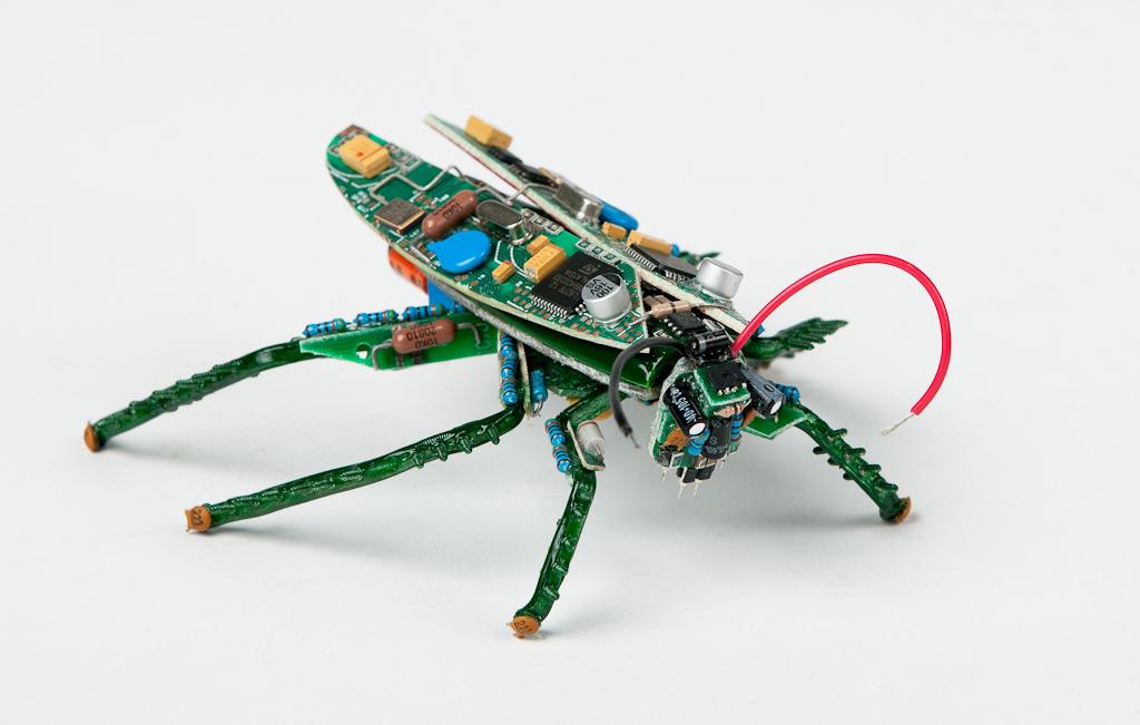 data-roach